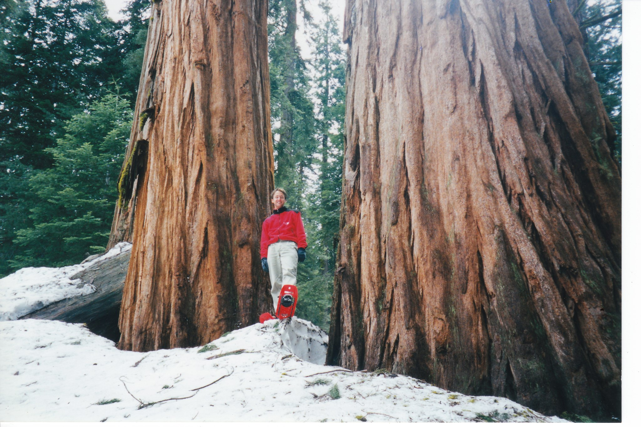 Dave Snowshoeing in Sequoia, 1998