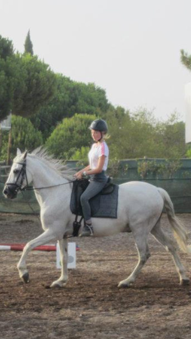 'Suan'. Beautiful Portuguese horse that you loved X