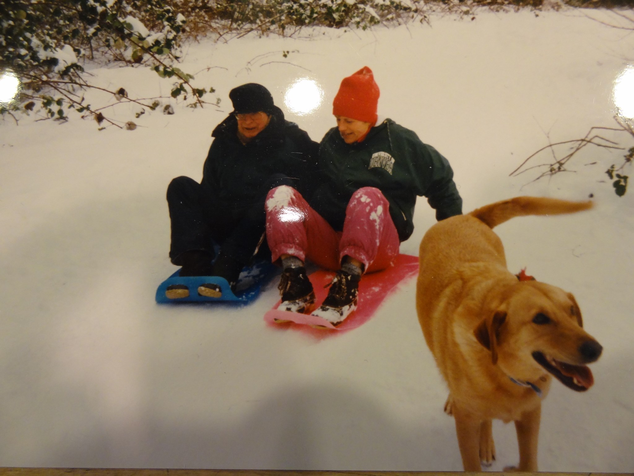 Sledding buddies and Holly