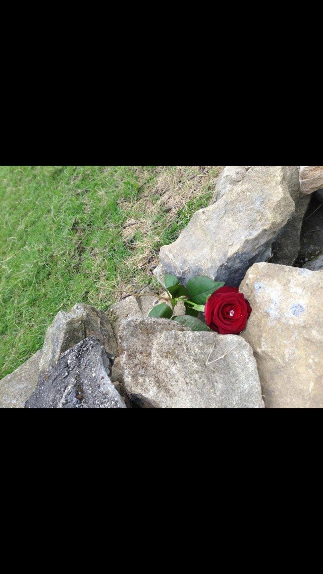 A rose left on the wall. 16/06/13