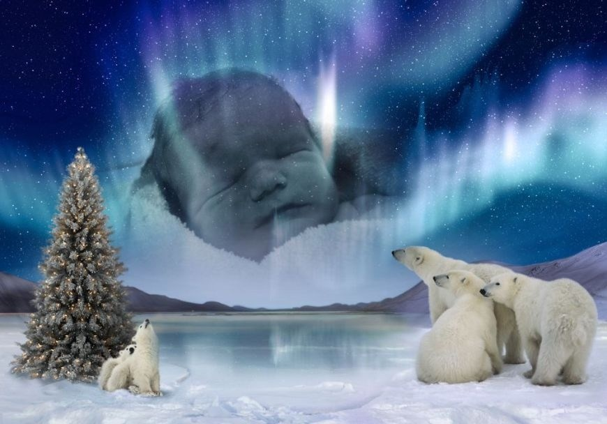 Lucian's Polar Bear Picture x