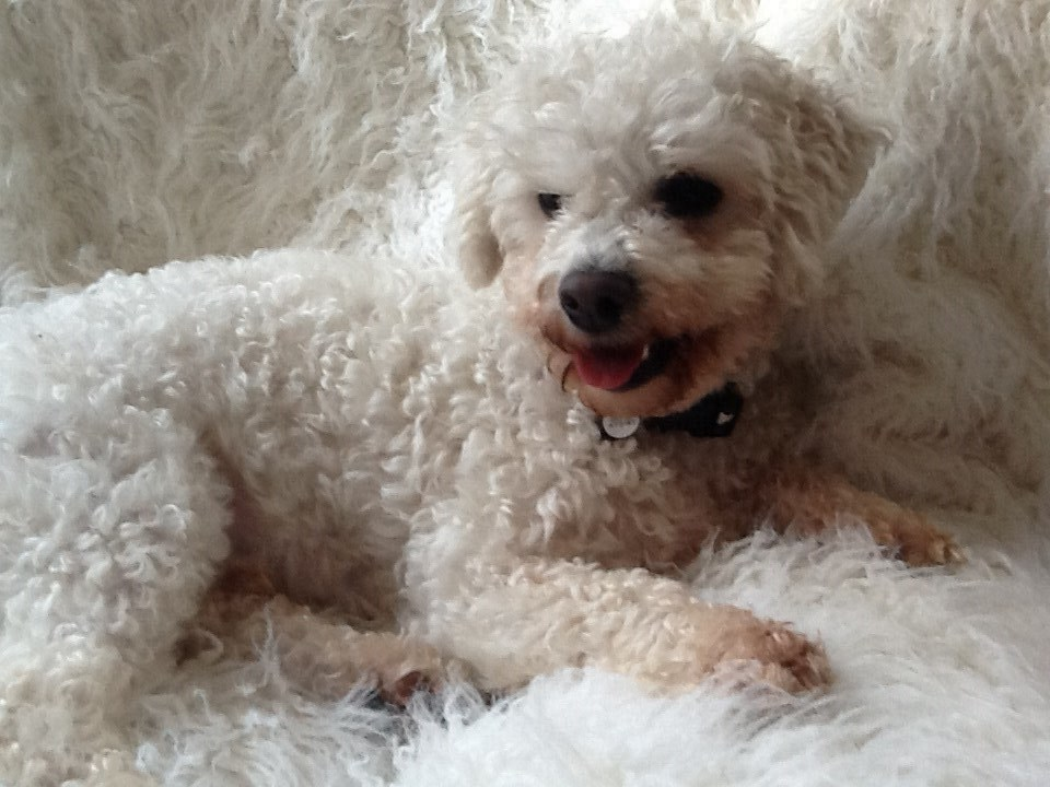 McManus ( formerly known as Prince) thanks you for his happy home. X