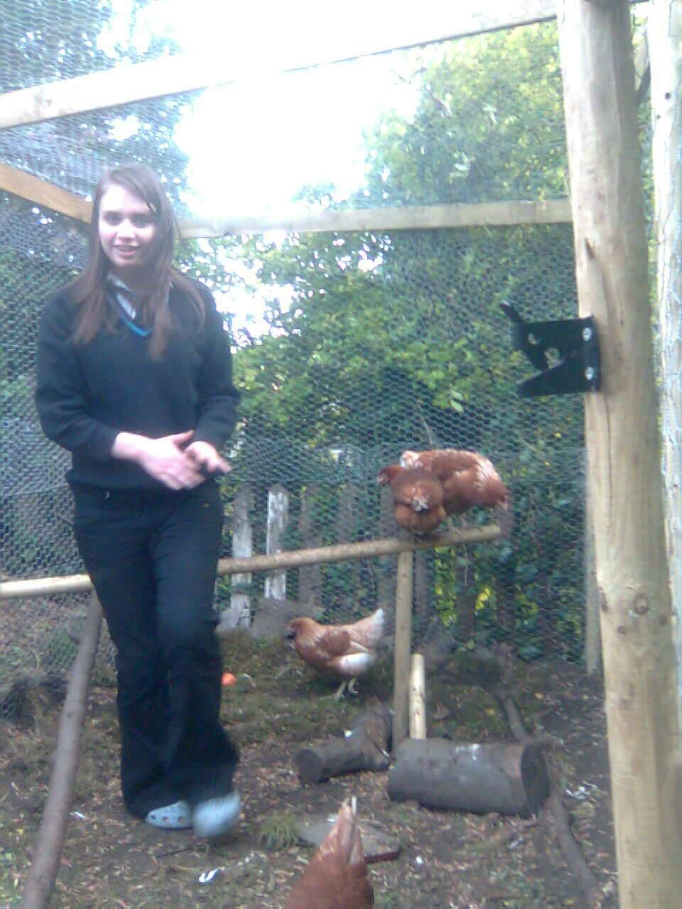 Getting to know our new chickens,  all named after the Twilight vampires because you loved the books... Apart from Henrietta