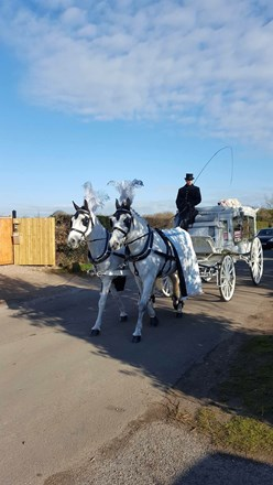 Beautiful horses taking my baby to the church