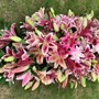 Floral tribute for Lily