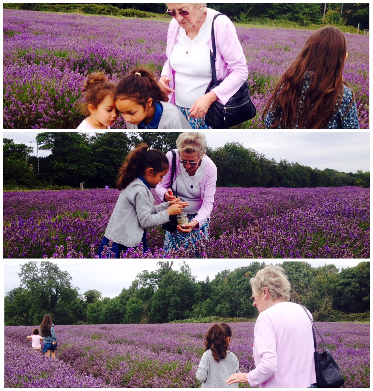 Rita going on a bug hunt in the lavender fields with her girls - Aug 2015