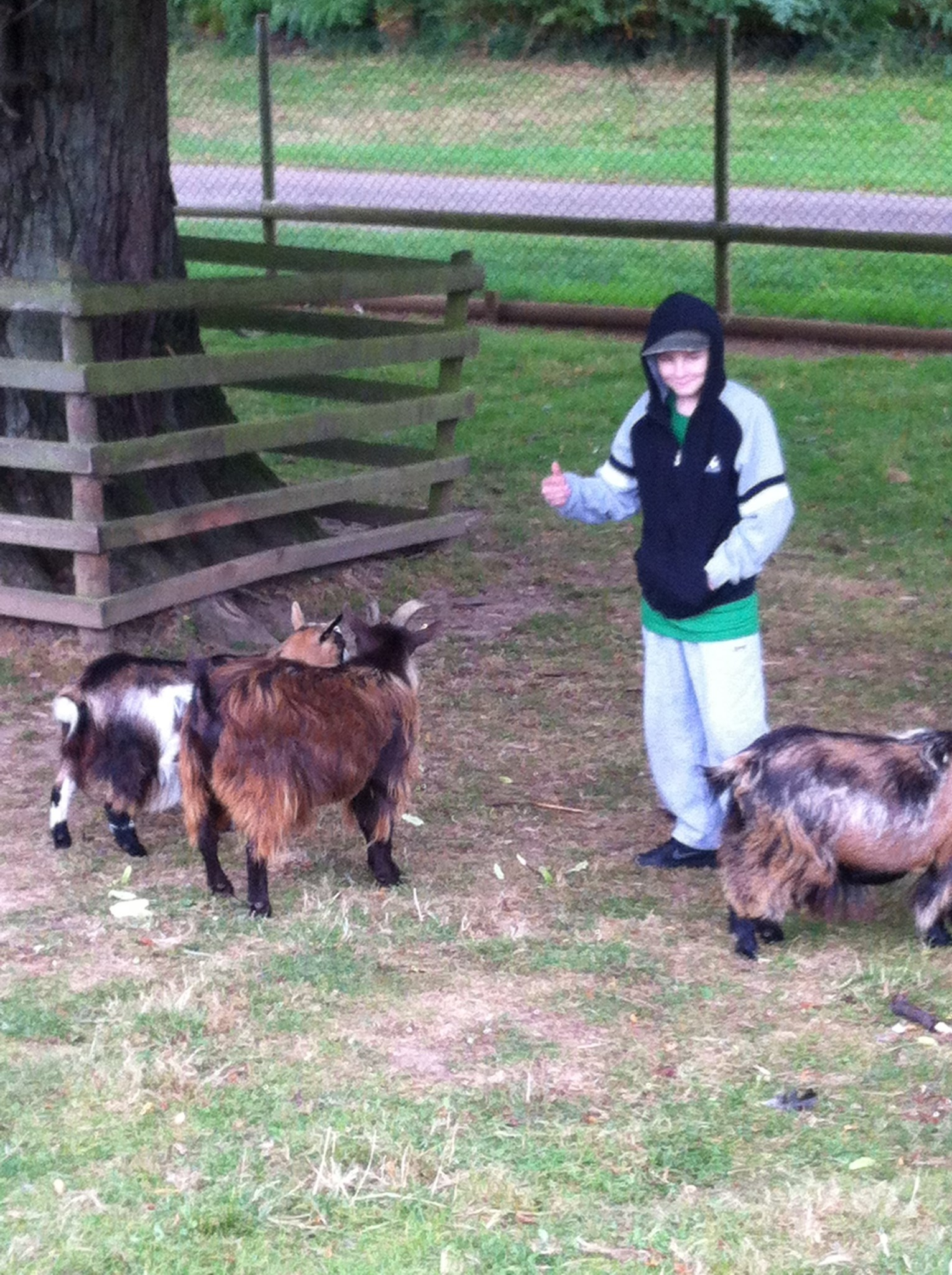 Ryan and the goats