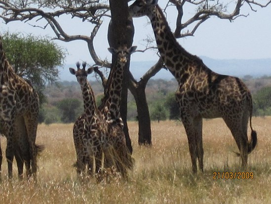 David took lovely pictures in Serengeti National Park!