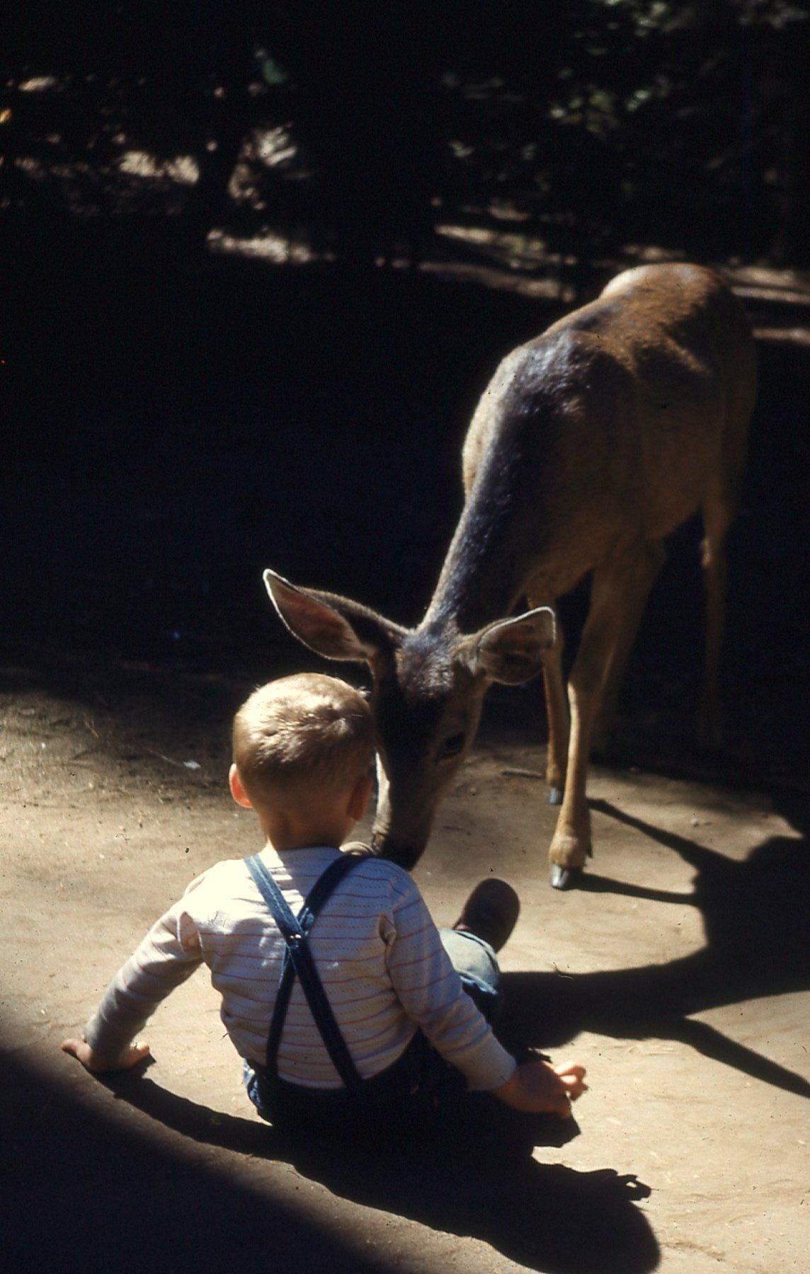 Joe with deer