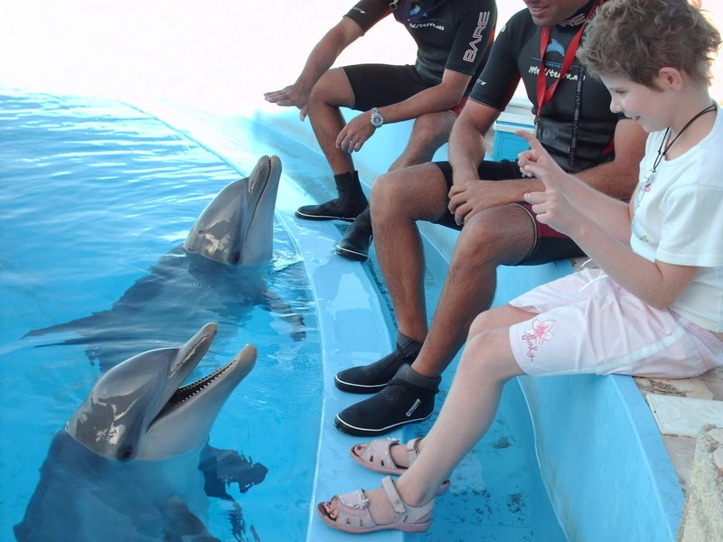 swimming with dolphins, Malta.  Thanks to Make a Wish