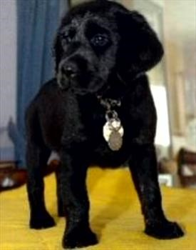 'Bailey' the guide dog for the blind named in Jim's honour