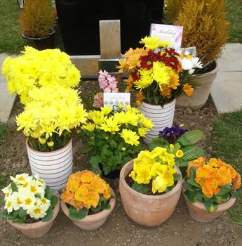 """Paul's """"Birthday"""" flowers in the warm, sunny colours that he loved"""