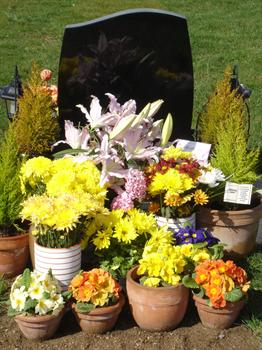 """Paul's """"garden"""" with all his beautiful Birthday flowers and plants"""