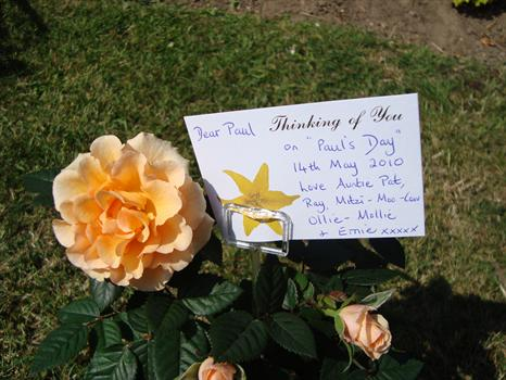 """""""Paul's Day"""", 14th May 2010 -  A pretty rose from Auntie Pat"""