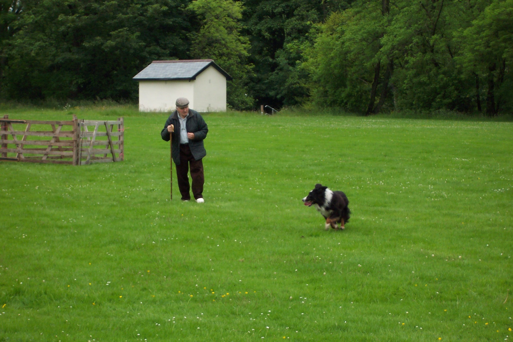 2007 Sheepdog trails in the Lake District