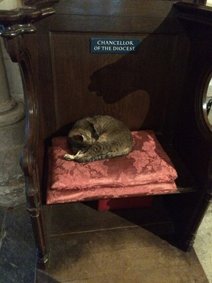 Photo taken on 14th Oct 2014. RIP Doorkins - a truly special cat.