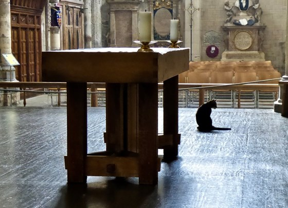 Bittersweet memories of a special cat at a special cathedral.