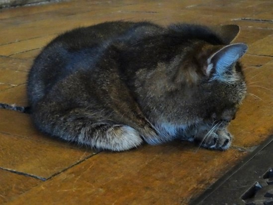 12th April 2016- went to meet this special girl for the first time, found her keeping herself warm by the heating vents at the back of the church. RIP x