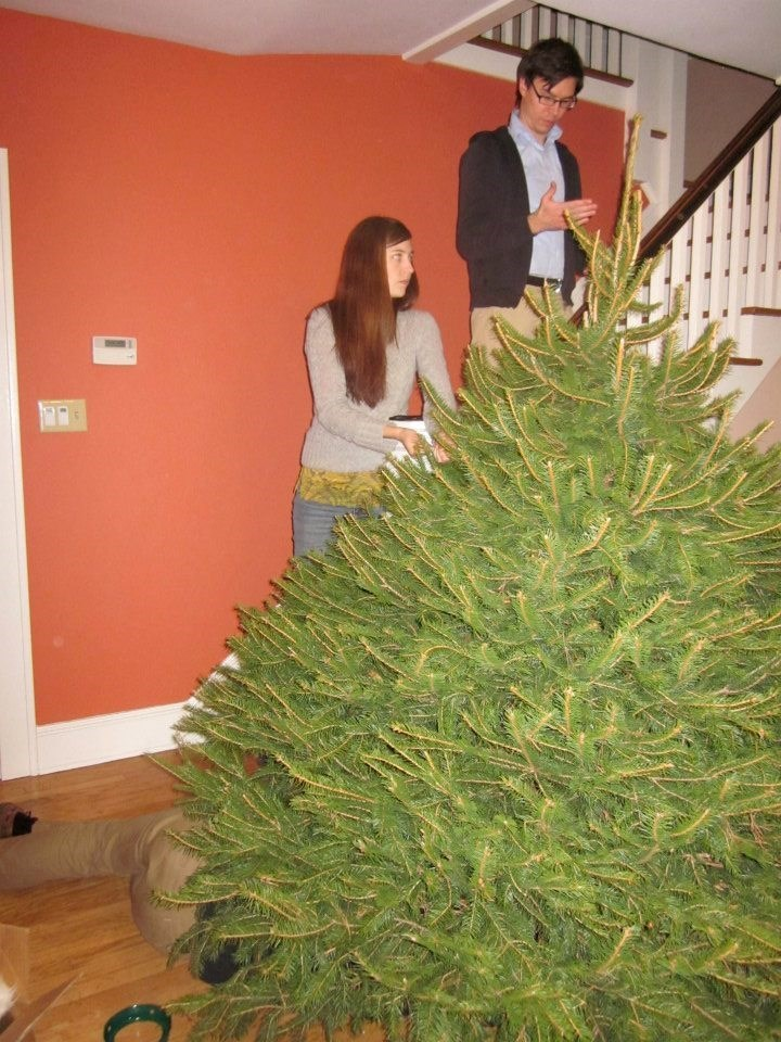 Marco and Lucy bought an enormous tree for our house. Marco is under it.