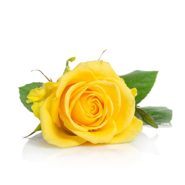 YELLOW ROSE - sent on April 22nd, 2021