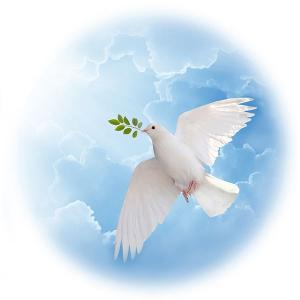 DOVE OF HOPE - sent on January 4th, 2021
